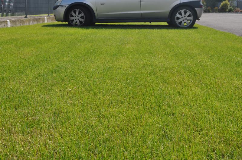 Green Parking Parcheggi E Percorsi Carrabili Inerbati