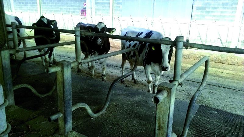 Agrigomma - tappetino in gomma per il benessere e la cura di cavalli e mucche